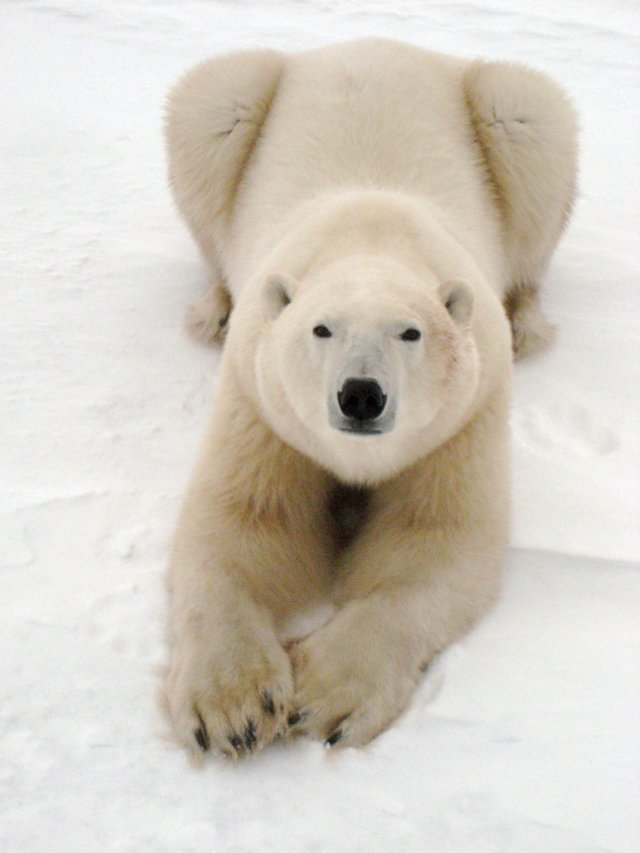 """HollywoodandFine.com """"To the Arctic,"""" like the cable series """"Frozen Planet"""" and other films of the type, provides a precious historical record. At some point in the future, as man-made climate […]"""